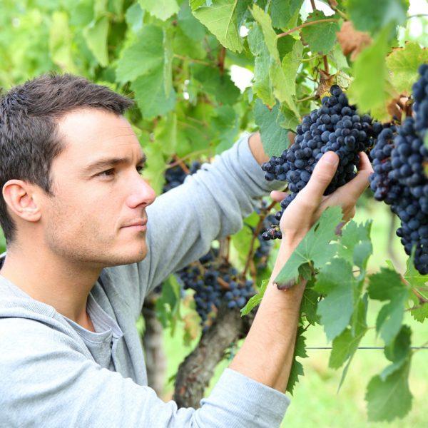 Terroir and Vineyard Management
