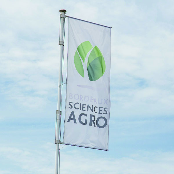 Associate Professor Viticulture position at Bordeaux Sciences Agro – ISVV